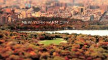 New York Farm City byPetrina TV1 year ago/ In order to show how vegetables are grown in New York, we reversed what the plants do: We harvest in spring what we filmed in fall. This is a non-commercial, independent project created by Petrina Engelke and Raul Mandru. Video: Petrina […]