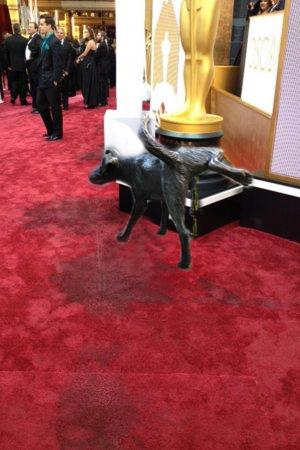 dog red carpet pee