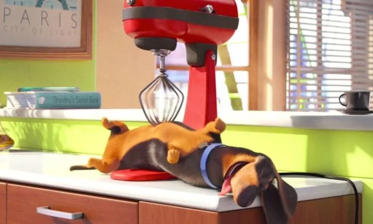 Gdy właściciel nie widzi, Budek urządza sobie psie SPA.