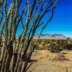 chisos mountains with ocotillo