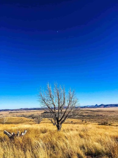 Lone Tree in a field outside chinati museum in marfa texas