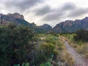 Pine Canyon Traill