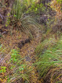 Ward Spring Trail in Big Bend National Park