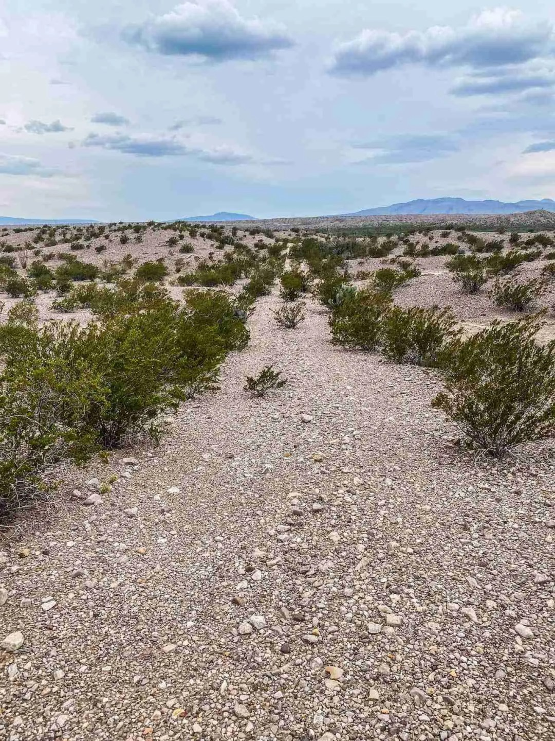 old road in big bend from la noria
