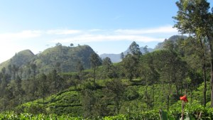 Sri Lanka produces much of the best high grown tea in the world.