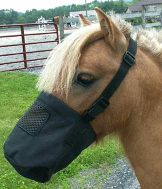 Miniature Horse and Pony Supplies