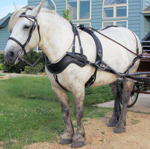 comfy fit harness miniature horse pony carefree or leather padding horse harness diagram at Horse Harness