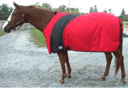 Draft horse turnout blanket