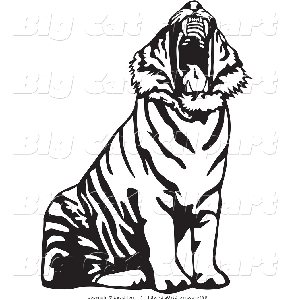 Big Cat Vector Clipart Of A Yawning Black And White Tiger