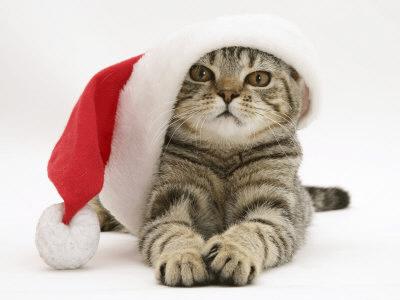 Today At Big Cat Rescue Dec 20