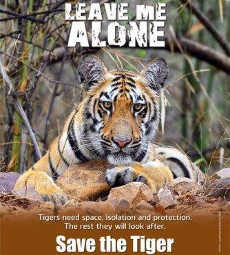 If we save the tigers we'll save the planet Big Cat Rescue