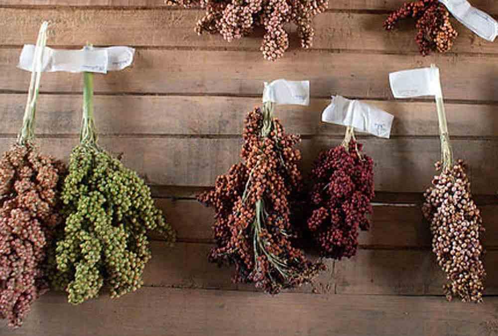 Harmonizing crop trait data: Crop Ontology