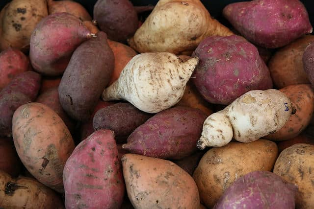Solanify: Crowd Sourcing of Potato Diversity Monitoring