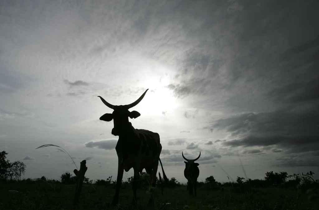 Farm.ink: Analysing livestock social media data for farmer chatbot