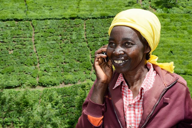 CubicA, the new farmer advisory app