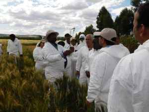 CIMMYT trains early career scientists on wheat rust diagnosis and management