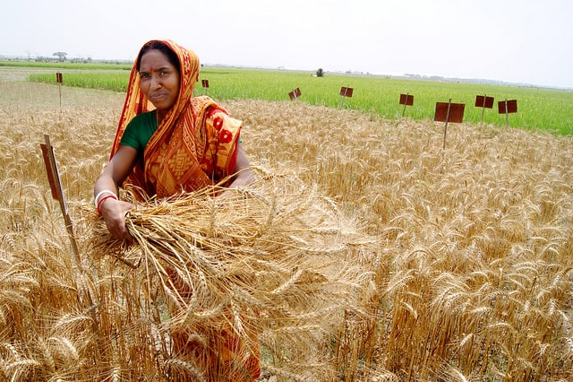 New CoP Publication: Role of Modelling in International Crop Research