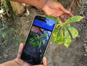 Artificial Intelligence takes root, helping farmers identify diseased plants