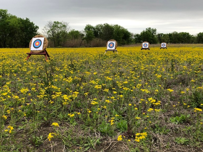 Archery targets in a field of yellow flowers