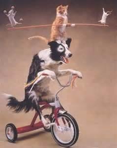 You can't teach an old dog...