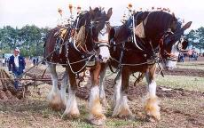 horse-ploughing1_1493077c