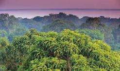 Amazon-rainforest-treetop-007
