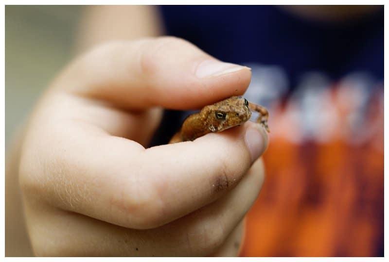 Forrest the Frog