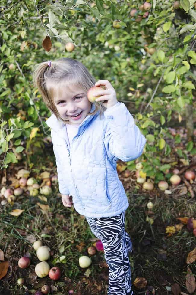 2015-11-17_0013Carter Mountain Orchard