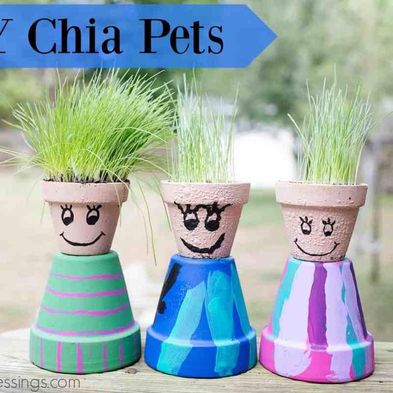 DIY Chia Pets