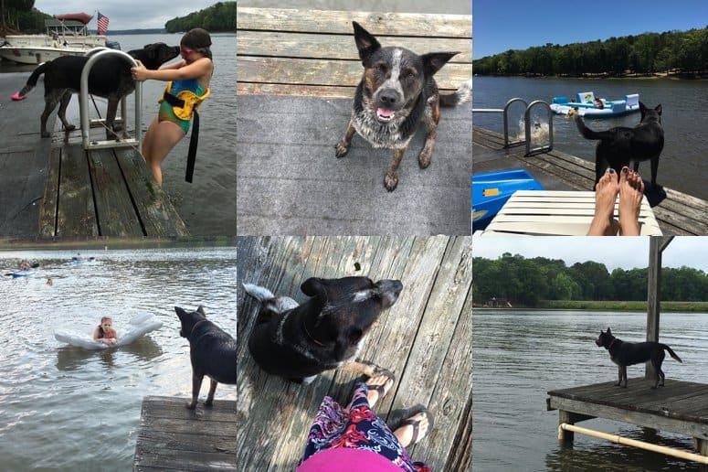 Best Lifeguard Puppy