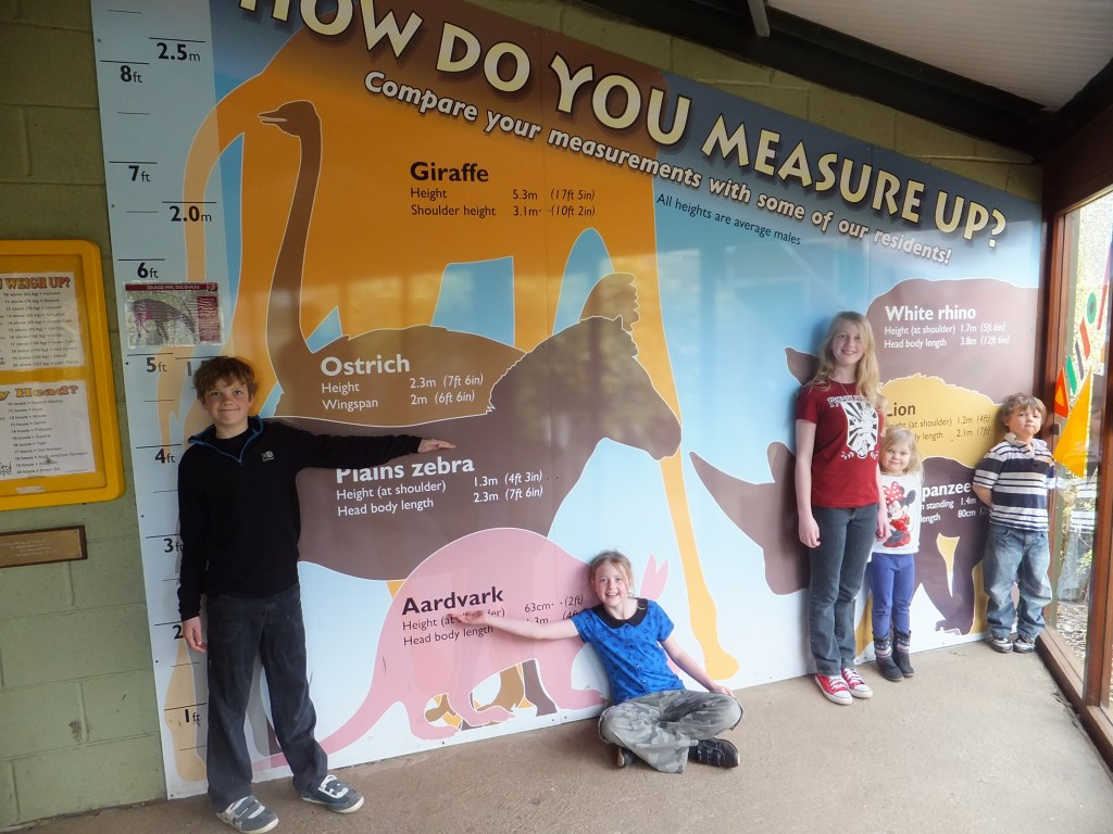 How do you measure up chart at Africa Alive
