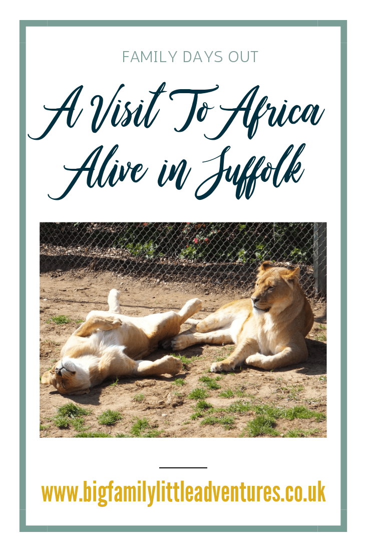 Africa Alive is situated in Kessingland Suffolk, home to many African animals including Lions, Giraffes, Zebras, Meerkats, Lemurs, Rhinos and many more, the perfect day out for a large family.