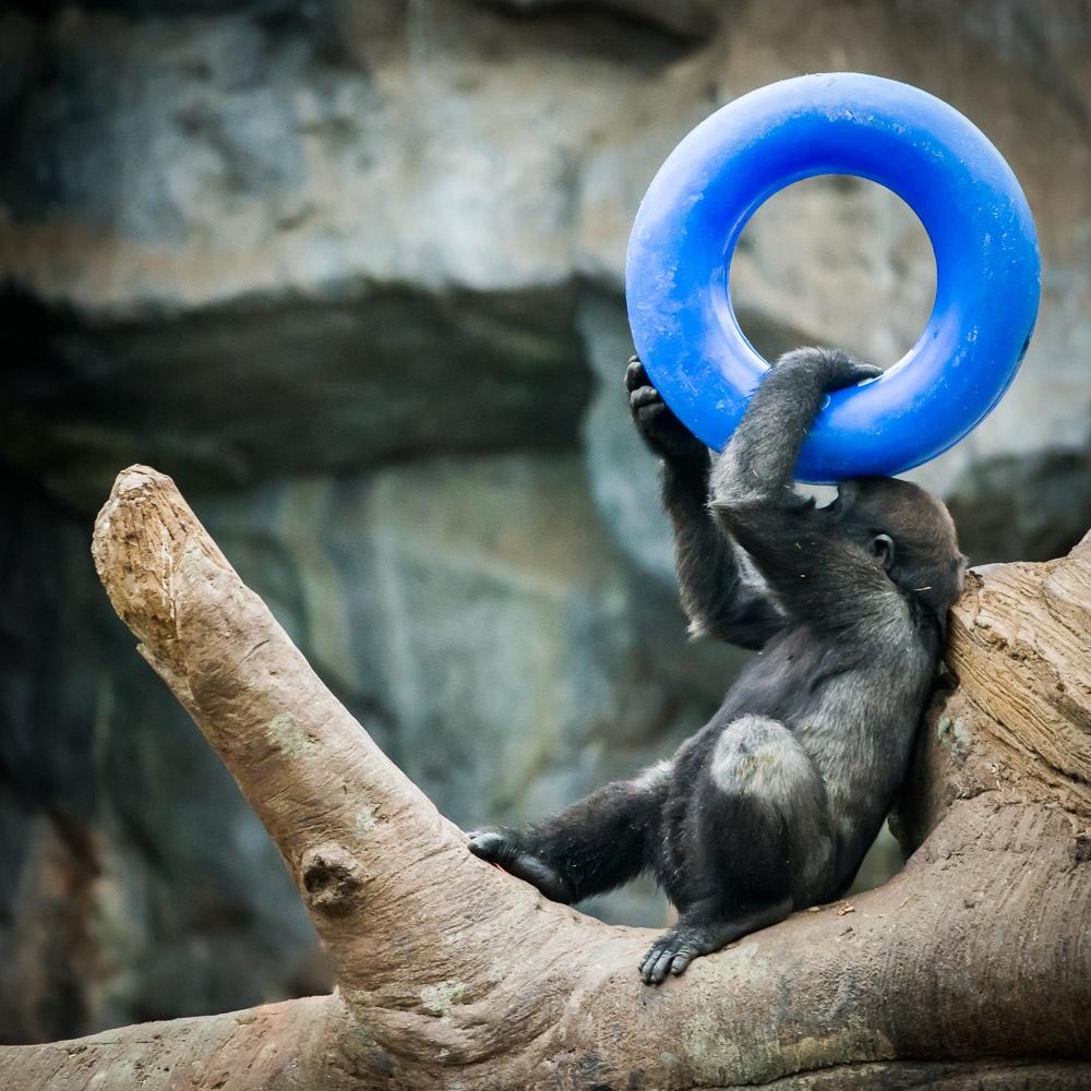 Monkey-Franklin-Park-Zoo Boston