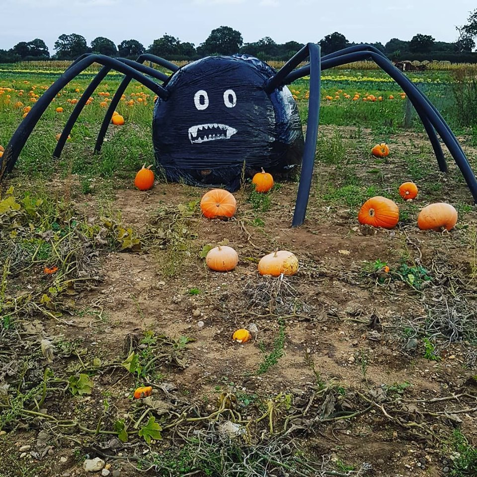 Pumpkin Patches In Norfolk Hill farm