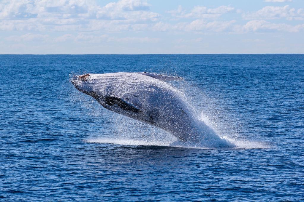 Australian Marine Life whale watching