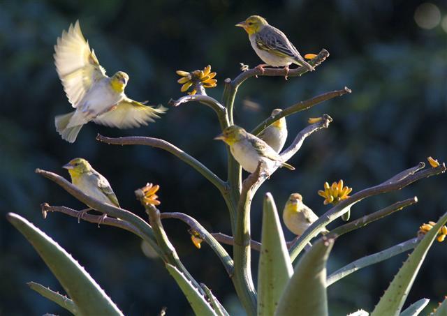 Birds at Reillys