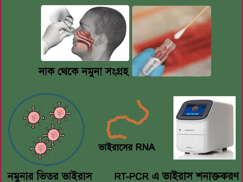কোভিড-১৯ শনাক্তে গোল্ড স্ট্যান্ডার্ড RT-PCR আসলে কতটা খাঁটি?