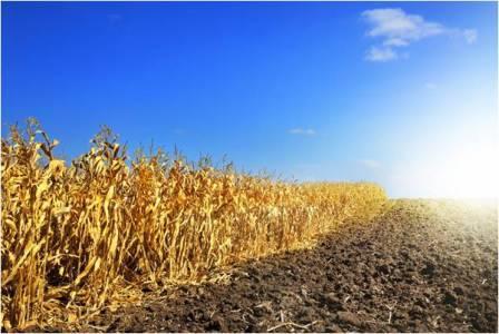 অতিরিক্ত UV রশ্মির উপস্থিতি ফসলের উৎপাদন কমিয়ে দিতে পারে। ছবিঃ Shutterstock