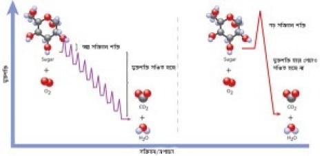 SugarOxidation_bn-300x145