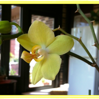 Wordless Wednesday (Orchid Edition)
