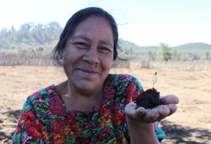 A Guatemalan Mother Participates In A Reforestation Project
