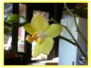 This is an orchid my mom grew and nurtured. She is that kind of caretaker with children AND with plants!