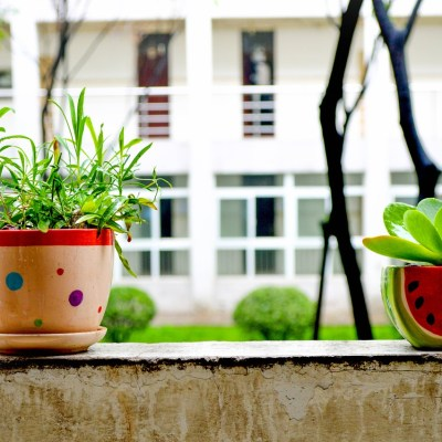Should Office Plants be Banned?