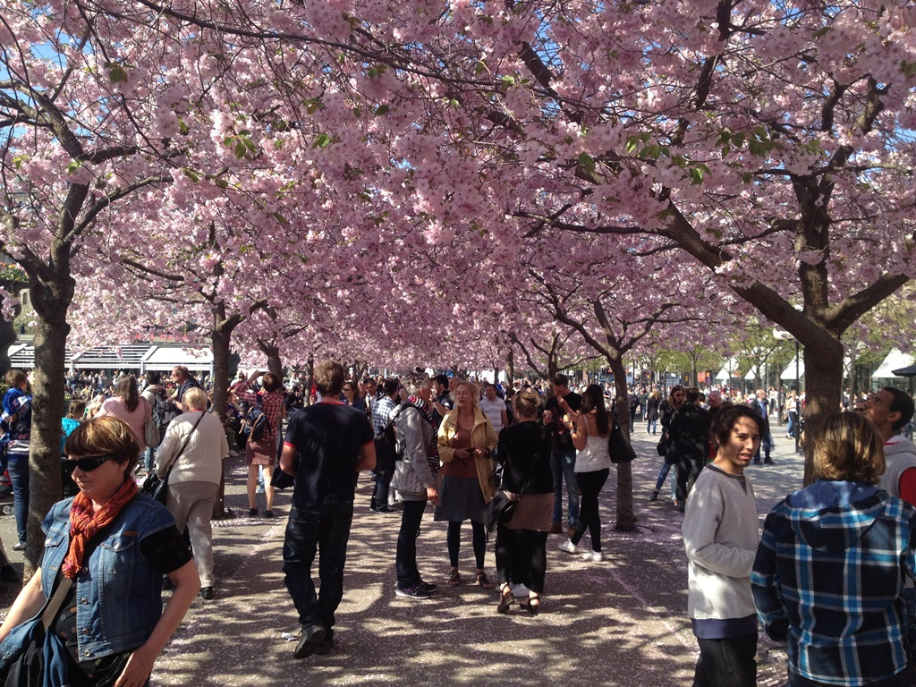 Blossoms in Kungstradgarden Stockholm