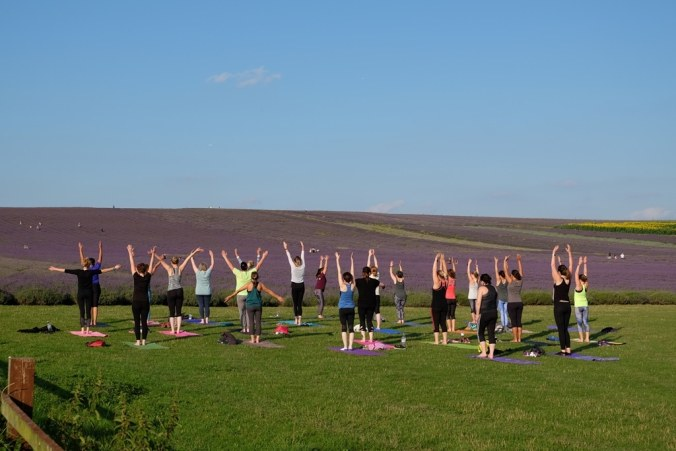 Hitchin lavender yoga at the base of the hill