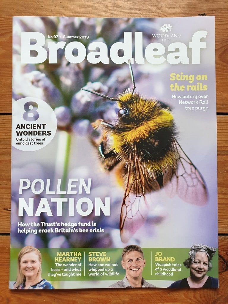The Woodland Trust's Broadleaf magazine summer edition cover
