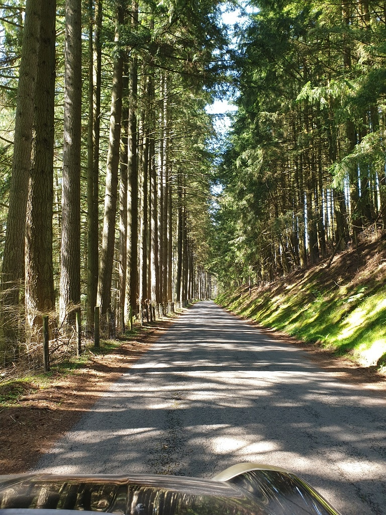 A wall of conifers on the road to Claerwen Dam