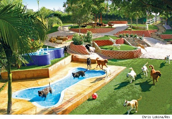 New East Hawai'i Pet Resort Opens For Business