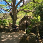 Deep Inside Waimea Valley and a Deadly Game of Checkers