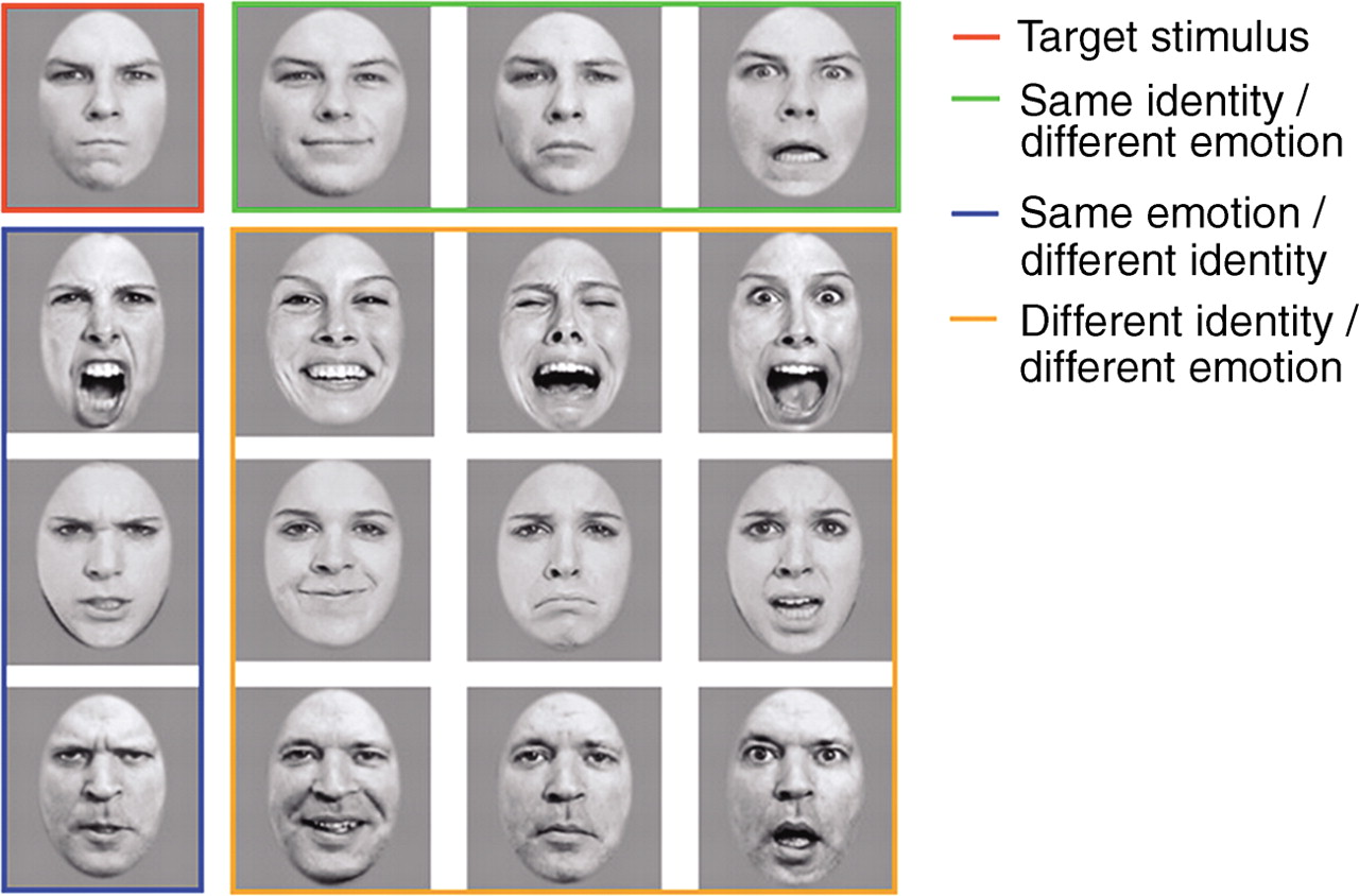 Bird Brains Show Similar Facial Recognition Abilities And